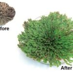 Resurrection Plant - Educational Innovations