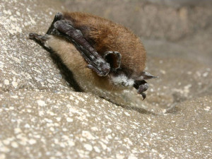 White-Nose Syndrome - Educational Innovations Blog