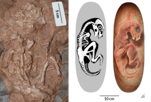 Fossils and Dinosaurs in the News - Educational Innovations Blog