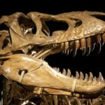 Fossils and Dinosaurs Discussion Starters - Educational Innovations Blog