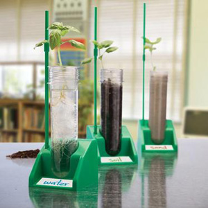 The Magic of Seeds, Spring, and Science! Educational Innovations Blog