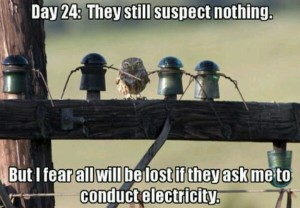 electricity humor - Educational Innovations