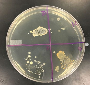 Setting Up a Bacterial Culture Lab - Educational Innovations Blog