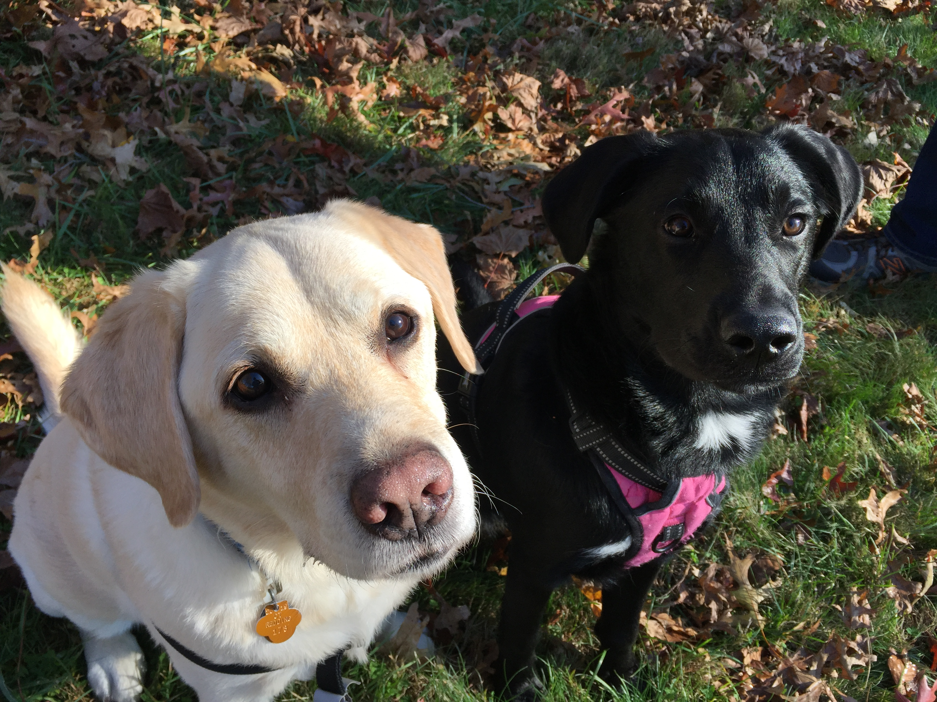 Dogs and Science - Educational Innovations Blog